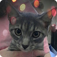 Adopt A Pet :: Teddy - Trevose, PA
