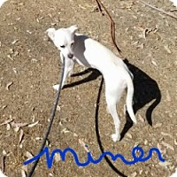 Adopt A Pet :: MINER AND MILLER - Gustine, CA