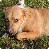 Adopt A Pet :: Tioger - Midlothian, VA