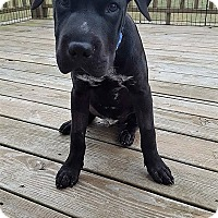 Adopt A Pet :: Orion - New Oxford, PA