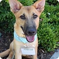Adopt A Pet :: Solstice - San Diego, CA