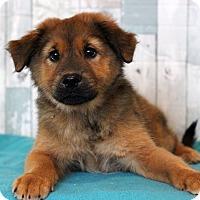 Adopt A Pet :: Trish - Waldorf, MD