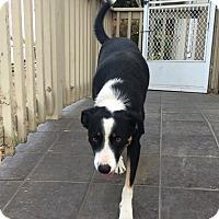Adopt A Pet :: TIP - Corning, CA