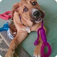 Adopt A Pet :: Alvin - Smithtown, NY