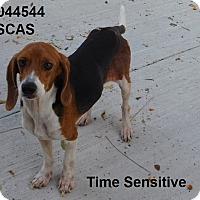 Adopt A Pet :: Luke - Lake Panasoffkee, FL