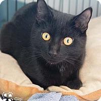 Adopt A Pet :: Gigi - Merrifield, VA