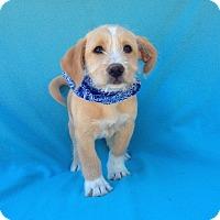 Adopt A Pet :: Dilbert - Burbank, CA