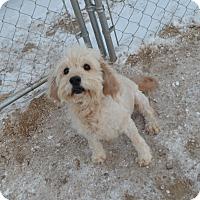 Adopt A Pet :: Curly - Peyton, CO
