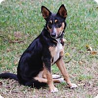 Adopt A Pet :: Precious *New* 1 year old - Stafford, TX