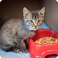 Adopt A Pet :: Zero - Madionsville, KY