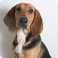 Adopt A Pet :: Harley - Redding, CA