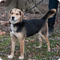 Adopt A Pet :: Ethel - New Martinsville, WV