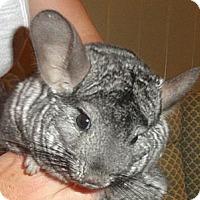 Adopt A Pet :: Gilly - Titusville, FL