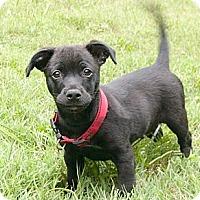 Adopt A Pet :: Magnum - Mocksville, NC