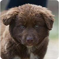 Adopt A Pet :: Coco - Providence, RI