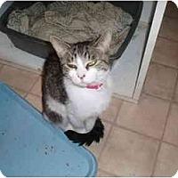 Adopt A Pet :: Petra - Hamburg, NY