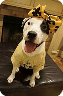 Pit Bull Terrier Mix Dog for adoption in Lake Charles, Louisiana - Bonnie