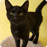 Adopt A Pet :: Ya Ya - Scottsburg, IN