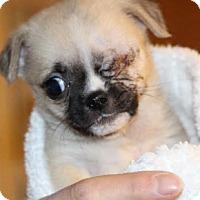 Adopt A Pet :: Jack - Avon, NY