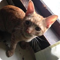 Adopt A Pet :: Truman - East Brunswick, NJ