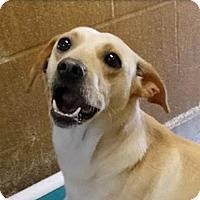 Adopt A Pet :: Lily  **ADOPTION PENDING** - Fairfax, VA