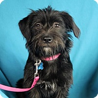 Adopt A Pet :: Lexie - Minneapolis, MN