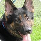 Adopt A Pet :: Hansel
