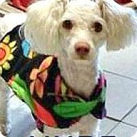 Adopt A Pet :: Newton - Boulder, CO