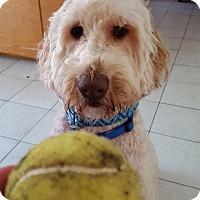 Adopt A Pet :: Frankie James - Alexandria, VA