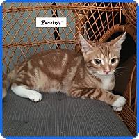 Adopt A Pet :: Zephyr - Miami, FL