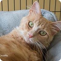 Adopt A Pet :: Chikfila - Merrifield, VA