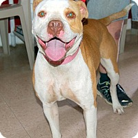 Staffordshire Bull Terrier Mix Dog for adoption in Lake City, Michigan - Dog ID# 2006  STRAY
