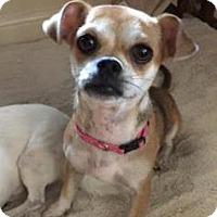 Adopt A Pet :: Josie - Austin, TX