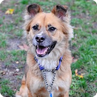 Adopt A Pet :: Snookie - Spring Lake, NJ