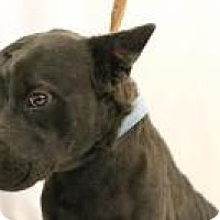 Adopt A Pet :: Carl - Huachuca City, AZ