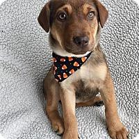 Adopt A Pet :: Cami (DE-Kim) - Newark, DE
