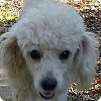 Adopt A Pet :: Dejavu - Alpharetta, GA