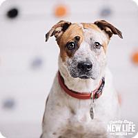 Adopt A Pet :: Tiara - Portland, OR