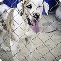 Adopt A Pet :: Jake - Weatherford, TX