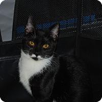 Adopt A Pet :: Elise (PB) - Exton, PA