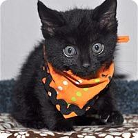 Adopt A Pet :: Lemur - Lincoln, CA
