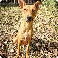Adopt A Pet :: Journey - Fredericksburg, TX