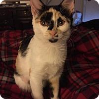Adopt A Pet :: Remi - Arlington/Ft Worth, TX