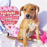 Adopt A Pet :: Fiddle - West Chicago, IL