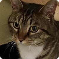 Adopt A Pet :: Tara - Leonardtown, MD