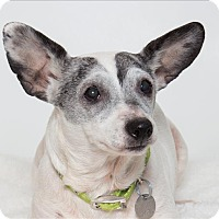 Adopt A Pet :: Tobi - San Luis Obispo, CA