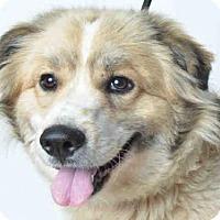Adopt A Pet :: HOPE - Ukiah, CA