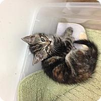 Adopt A Pet :: Kinley - Aiken, SC
