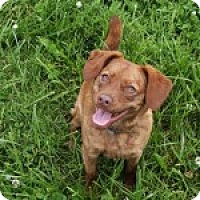 Adopt A Pet :: Paisley - Russellville, KY