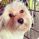 Adopt A Pet :: Holly Noel